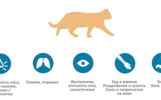 Аллергия на кошек у взрослых и детей: симптомы, почему бывает, чем лечить