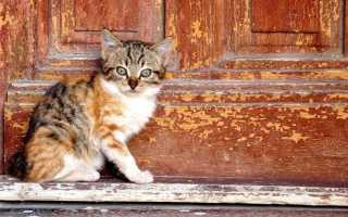 Кошка пришла в дом: значение приметы