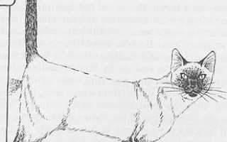Кот метит территорию в доме — что делать, как отучить, отзывы