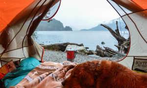Кот из Канады путешествует по горам и ведет себе Instagram