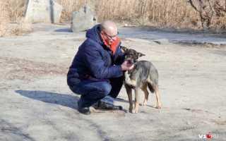 Пес спас заживо погребенного бродягу