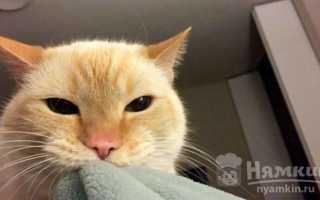 Как заставить кота не будить вас по утрам
