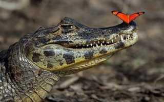 Зубастые животные: подборка преставителей фауны с самым большим количеством зубов