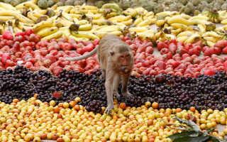 В Таиланде для обезьян накрыли праздничные столы с фруктами и мороженым