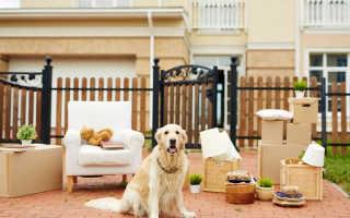 Как снять квартиру с домашними животными на руках