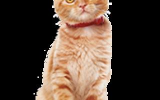 Корм Хиллс для кошек: все о рационах и их специфике