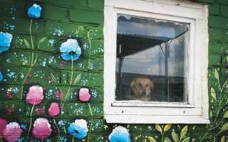 В Перми будут дог-боксы с пакетами для уборки за собаками