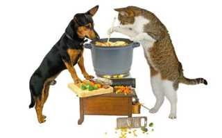 Бесполезные ингредиенты в корме для собак
