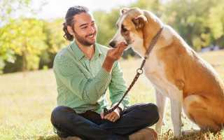Как собака выбирает хозяина и как понять, кто для нее является лидером