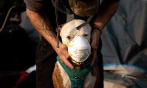 В Калифорнии группа полицейских спасла животных от лесного пожара