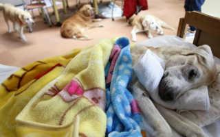 В Токио рассказали о популярности домов престарелых для животных