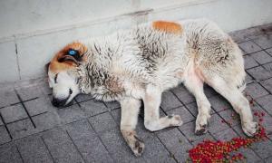 В бобруйский приют для бездомных животных подбросили петуха
