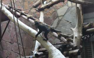 В китайском зоопарке примат ударил девочку после угощения