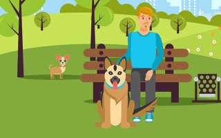 Австралиец придумал как наказать невоспитанных хозяев собак