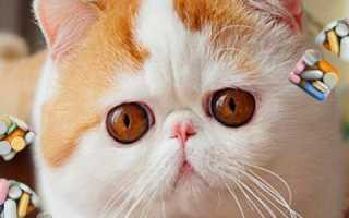 Антигистаминные препараты для кошек: обзор средств и правила применения