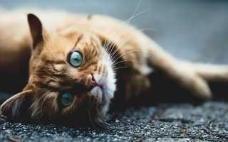 Жителям Нью-Йорка запретили удалять когти кошкам