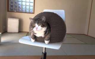 В Кемерово кот закрылся в квартире и не пускал хозяев