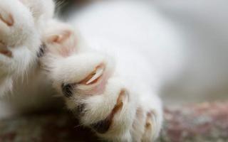 Как подстричь кошке когти: Полезные рекомендации по уходу