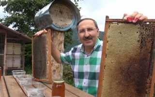 Ворующие мёд медведи стали его дегустаторами
