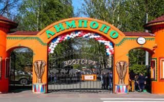 В зоопарке «Лимпопо» родился теленок породы хайленд