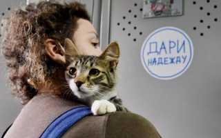 В Москве собрали 200 килограммов корма для приютов