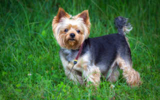 Недорогие породы собак — топ-12 самых дешевых щенков, фото