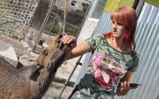 В Воронежской области женщина подобрала и выходила лосёнка
