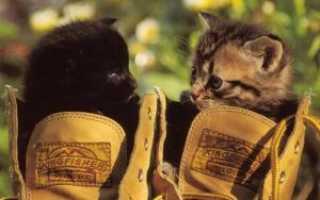 Как избавиться от запаха кошачьей мочи в обуви, самые эффективные народные методы и специализированные средства, чтобы вывести амбре