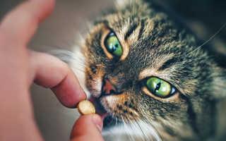 Витамины для кошек для иммунитета: какие необходимы, как давать, обзор популярных