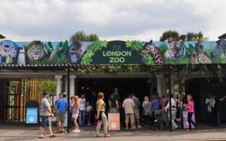 В Лондонском зоопарке проходит сезонное взвешивание животных