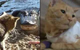 В Индии кот боролся с коброй, чтобы спасти хозяев