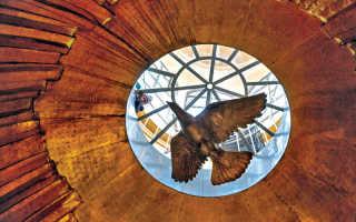 В Санкт-Петербурге волонтёры спасли голубя, запутавшегося в леске