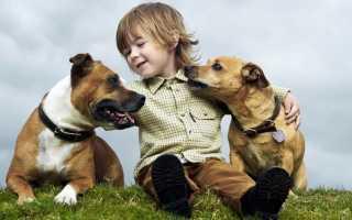 Лучшая порода собак для подростка – фото и описание