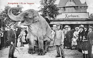 До первого дня рождения не дожил четыре дня: в зоопарке Белгорода умер жирафёнок из Калининграда