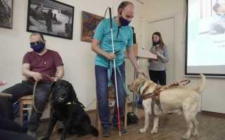 Незрячий житель Урала попросил помочь попавшему под машину псу‐поводырю