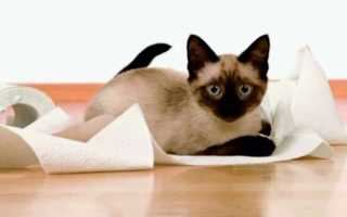 Как отучить кота или кошку гадить в неположенном месте и мимо лотка – действенные способы воспитания
