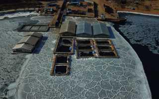 Косаток, освобождённых из приморской «китовой тюрьмы», выпускают в Охотское море