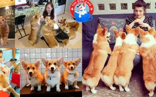 Душа в душу: дружба щенка и енота умилила любителей животных по всему миру