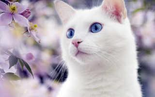 Белая кошка примеряет для себя рыбий дом