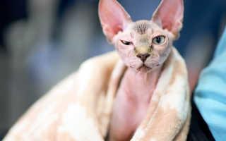 Курьезный случай: как женщине продали подделку вместо породистого кота