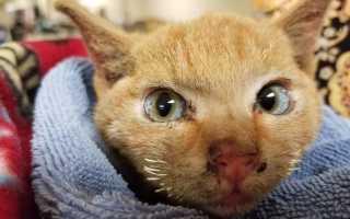 Выжившего при пожаре в Калифорнии кота вернули семье