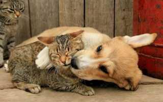 Можно ли давать кошке собачий корм