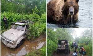 В Приморье медведь облюбовал заброшенную машину