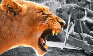 В Индии леопард-людоед убил мужчину