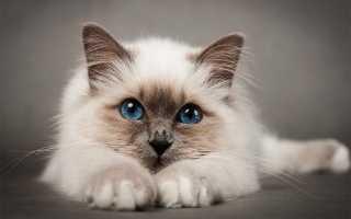 Корм для кошек Wahre Liebe (Варе Либе): плюсы и минусы, отзывы ветеринаров