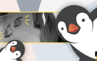 В Новой Зеландии пингвины поселились в суши-баре