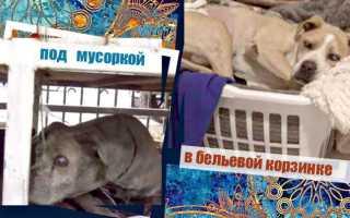 Вологодскому щенку, которого спасли на свалке, дали имя