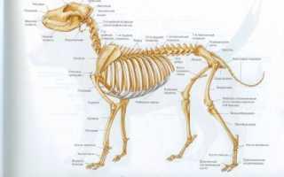 Зачем собаке хвост, какие у него функции