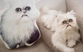 В Сети нашли самого страшного кота