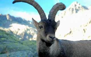 Животные, которых считали вымершими, а потом нашли